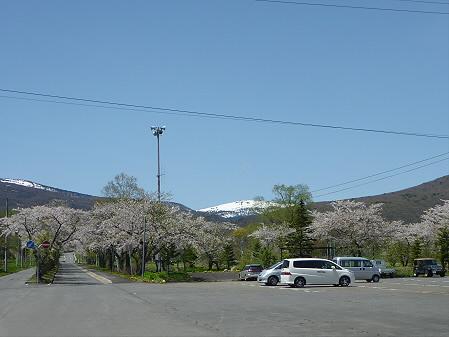 八幡平トラウトガーデンの桜09(2011.5.15)