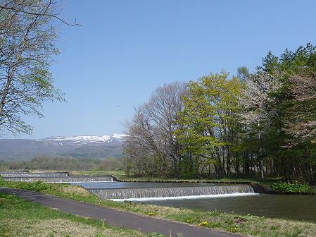 明治百年記念公園の桜01(2011.5.16)