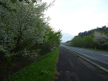 上坊牧野手前の桜並木01(2011.5.17)