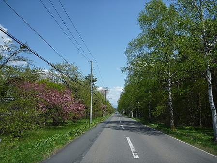 明治百年記念公園の桜04(2011.5.18)