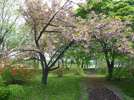 明治百年記念公園07(2011.5.25)