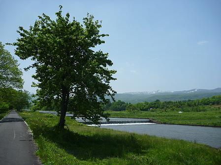 明治百年記念公園08(2011.5.31)ツツジ