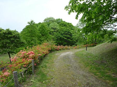 八幡平市桜公園の様子06(2011.6.4)