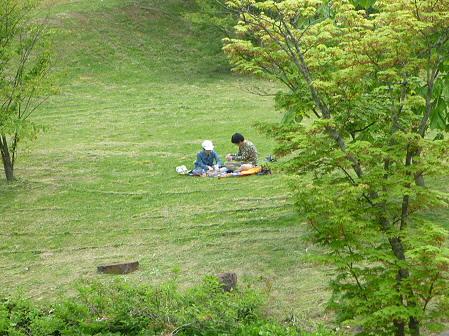 八幡平市桜公園の様子10(2011.6.4)
