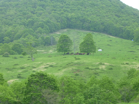 七時雨山開き登山08(2011.6.5)