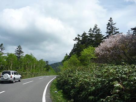 樹海ライン29(2011.6.12)