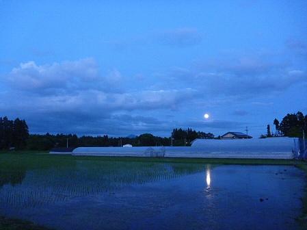 空と雲と田と12(2011.6.15)
