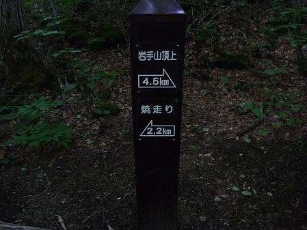 コマクサへGO!27(2011.7.2)