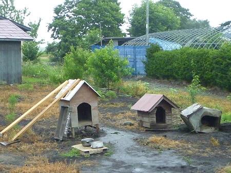 平笠の犬小屋スリー01(2011.7.27)