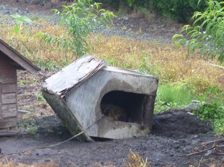 平笠の犬小屋スリー02(2011.7.27)