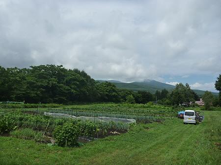 三田村さんの畑02(2011.8.19)