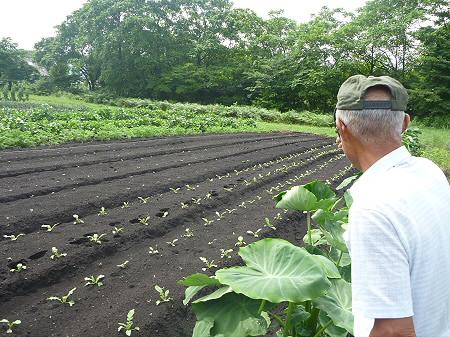 三田村さんの畑05(2011.8.19)
