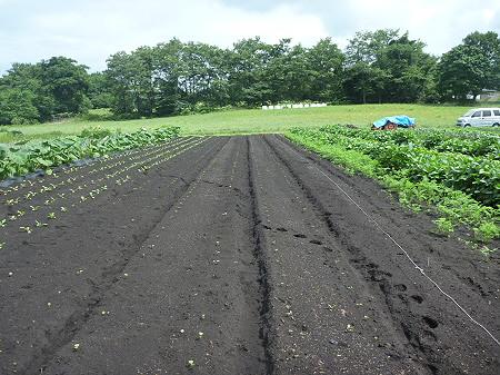 三田村さんの畑06(2011.8.19)