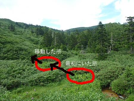 クマ発見10(2011.8.19)