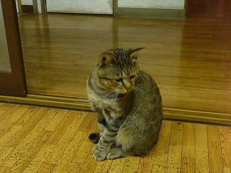 斎藤ミニミニ牧場にて03(2011.8.26)
