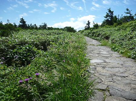 快晴の八幡平山頂28(2011.8.27)