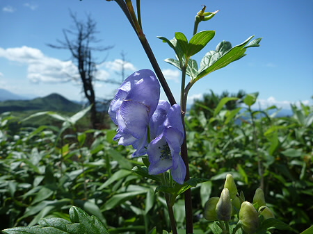 快晴の八幡平山頂89(2011.8.27)