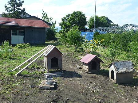 平笠の犬小屋スリー04(2011.8.27)