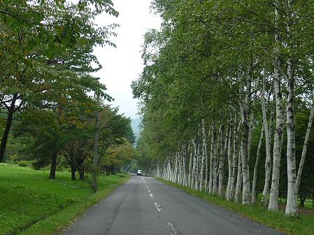 県民の森の竹トンボ01(2011.9.17)