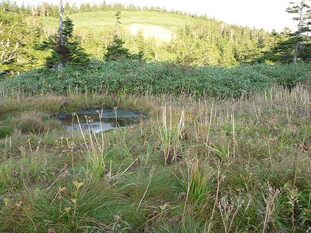 朝の黒谷地湿原28(2011.9.24)