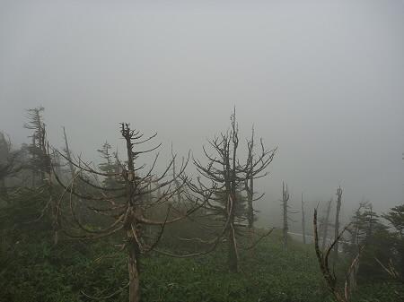 八幡平山頂付近10(2011.9.24)