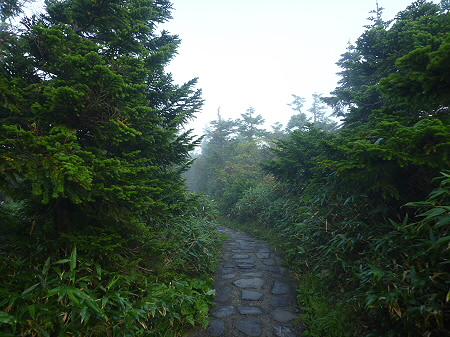 八幡平山頂付近19(2011.9.24)