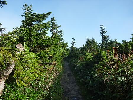 八幡平山頂付近28(2011.9.24)