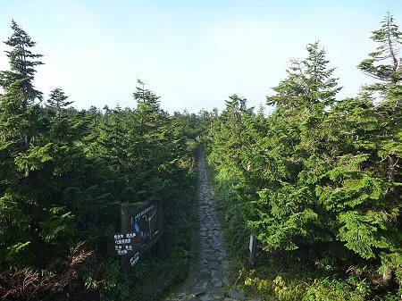 八幡平山頂付近30(2011.9.24)