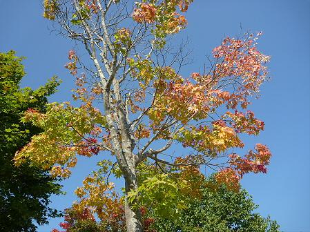 青空のさくら公園02(2011.9.29)