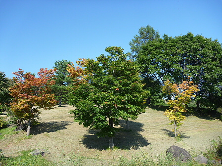 青空のさくら公園05(2011.9.29)