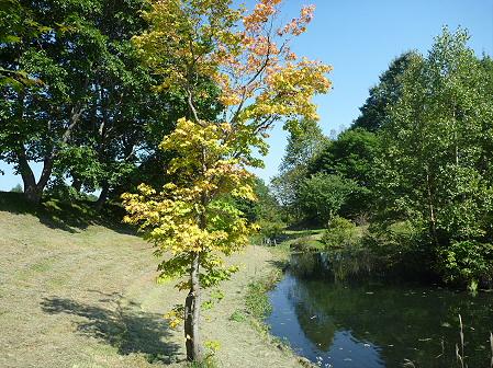 青空のさくら公園07(2011.9.29)