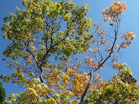 青空のさくら公園08(2011.9.29)