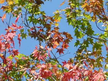 青空のさくら公園10(2011.9.29)