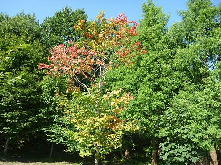 青空のさくら公園11(2011.9.29)