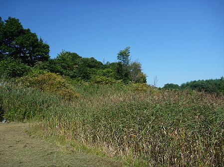 青空のさくら公園14(2011.9.29)