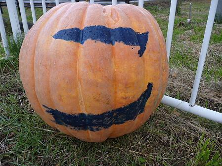 かぼちゃ12(2011.10.3)