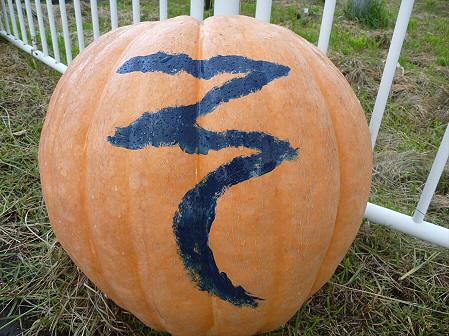 かぼちゃ13(2011.10.3)