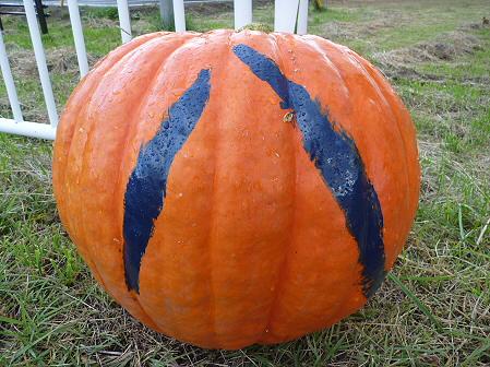 かぼちゃ14(2011.10.3)