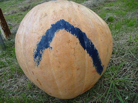 かぼちゃ17(2011.10.3)