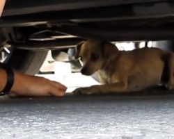 A must see dog rescue Cora Please share and help this video go viral
