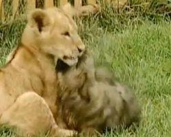 犬 loves ライオン