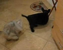 Cat Feeds Dog And Feeds and Feeds and Feeds
