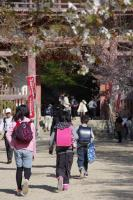 BL110413醍醐寺2IMGP0216