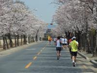 BL110409慶州さくらマラソン3-7RIMG0215
