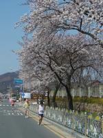 BL110409慶州さくらマラソン3-11RIMG0228
