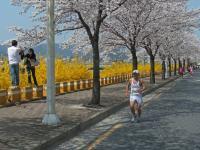 11-04-09慶州さくらマラソン4-4RIMG0248