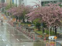 BL110423桜通3RIMG0637