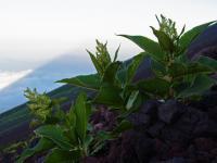 BL110715富士山2-7R0013900