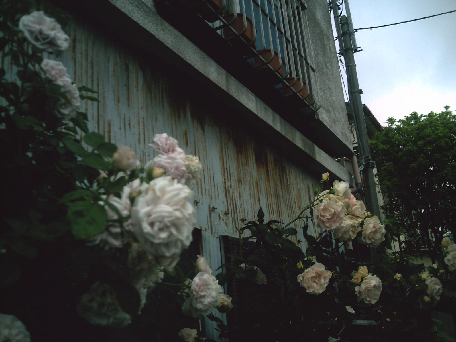 PICT2966.jpg