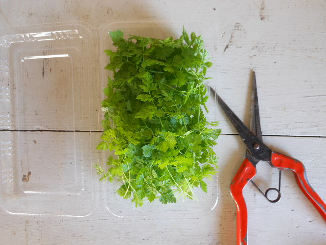 自然栽培セルフィーユ1パック。